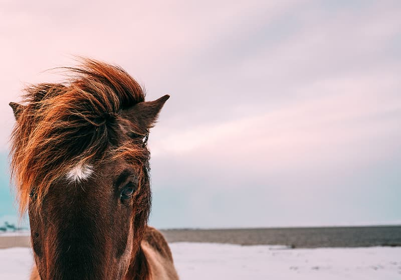 Brown horse outdoors