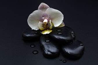 White and pink flower on black pebbles