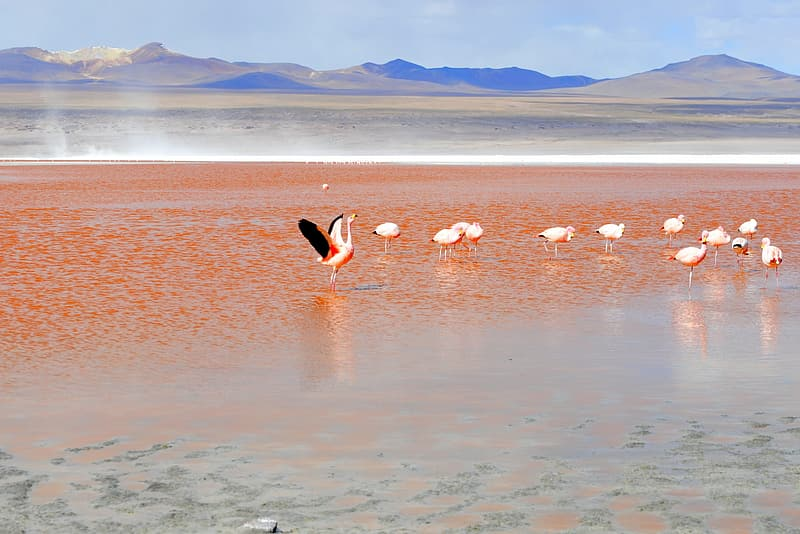 Flock of pink cranes on beach shore
