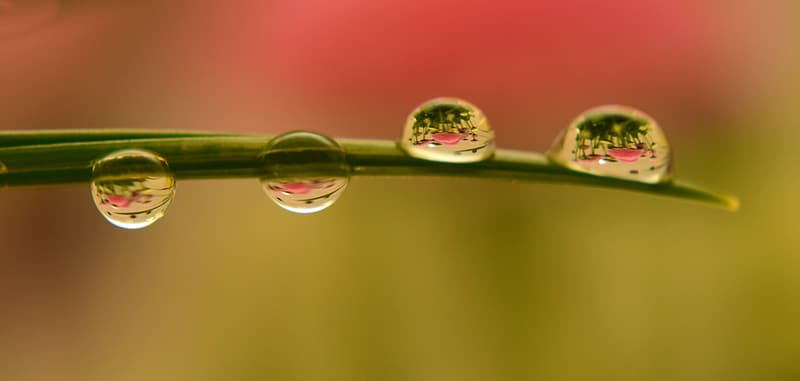 Macro photography of tear drops on green leaf