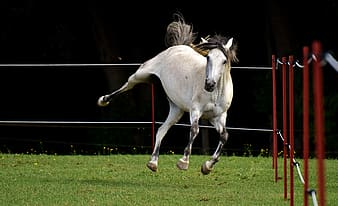 White horse ruuning on the field