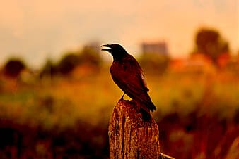 Black bird on brown wooden fence during daytime