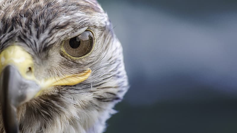 Brown and white eagle closeup photography