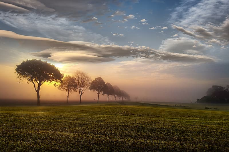 Green grass field with trees during sunset