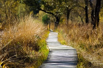 Photo of pathway between grass