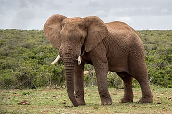 Brown elephant on green grass field during daytime