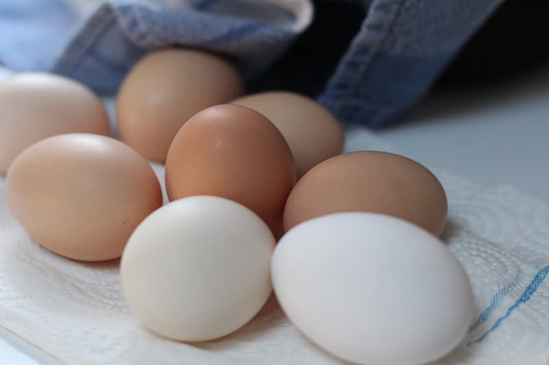 Shallow focus photography of white and brown chicken eggs