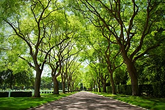 Gray pathway surrounded by gray trees