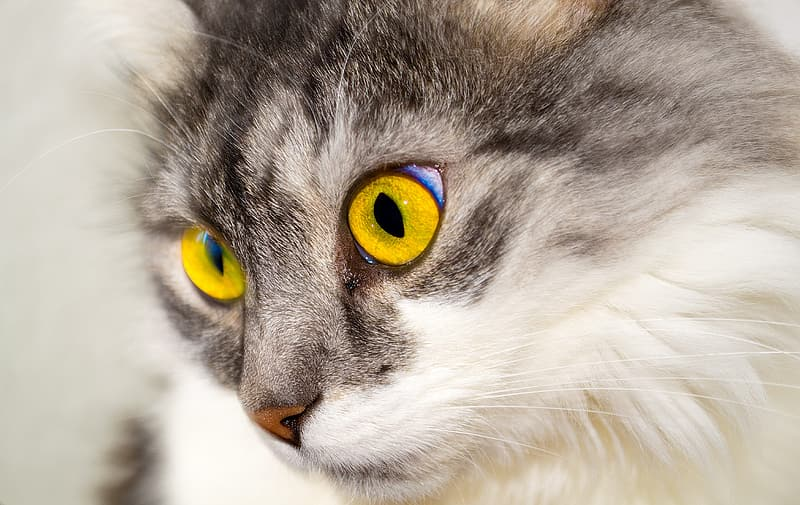 Selective focus photography of brown adult cat