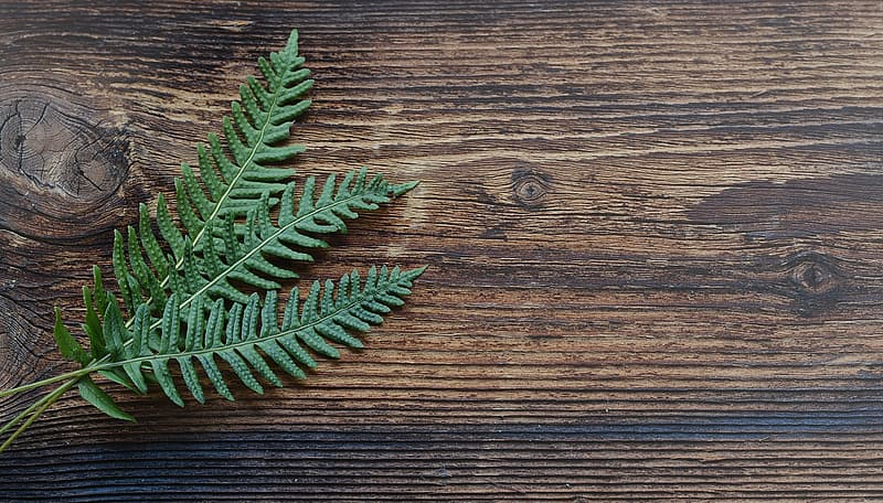 Green linear leaf plant on brown wooden surface
