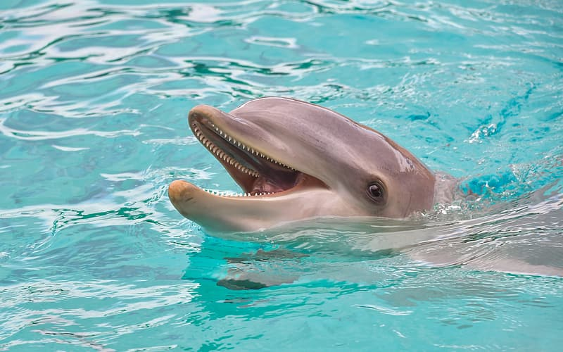 Dolphin on water