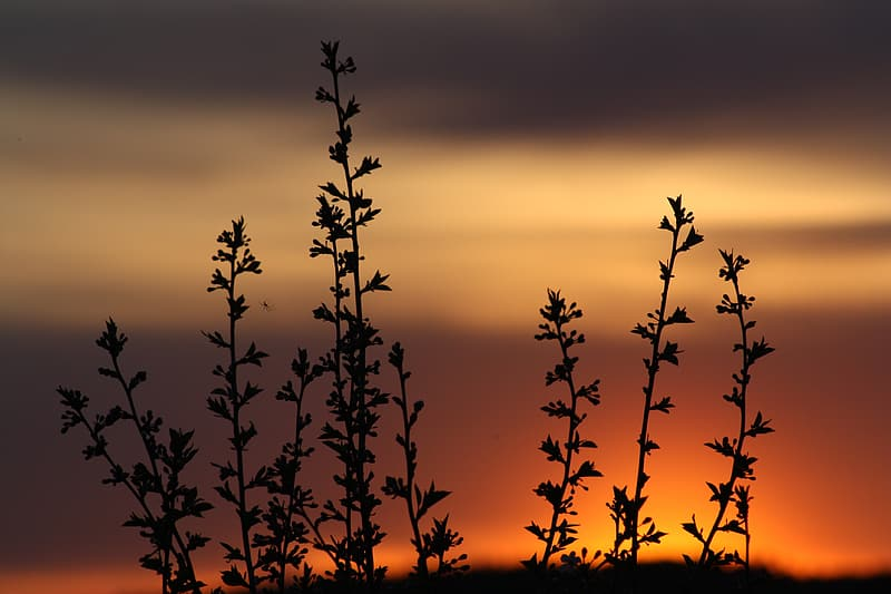 Silhouette photo of plant during golden hour