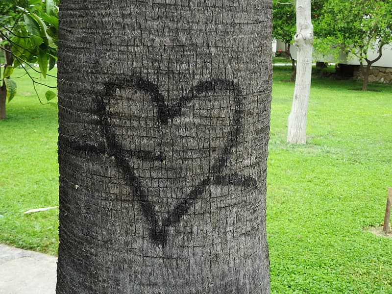 Tree trunk with heart illustration