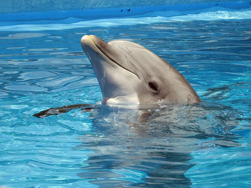 Dolphin on body of water at daytime