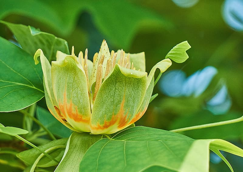 Selective focus photo of green petaled flower