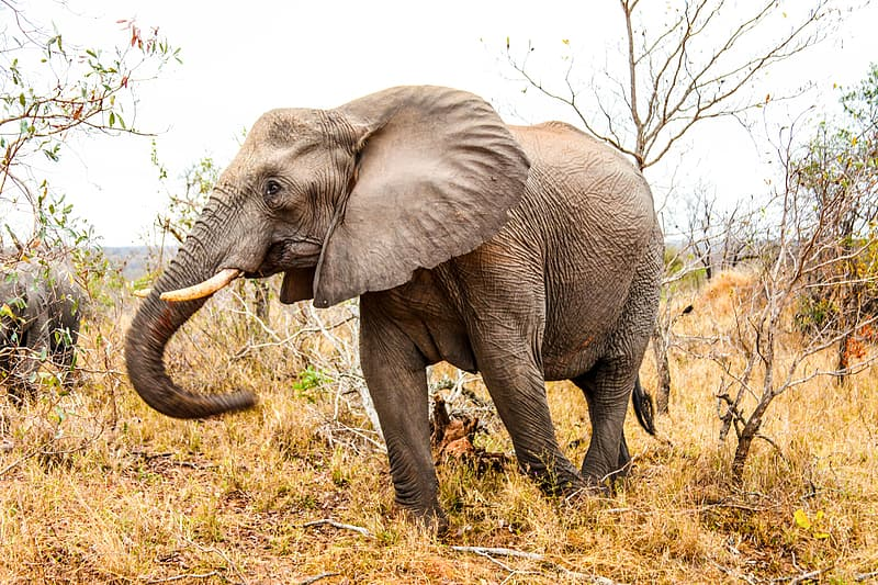 Photo of brown elephant standing near leafless trees