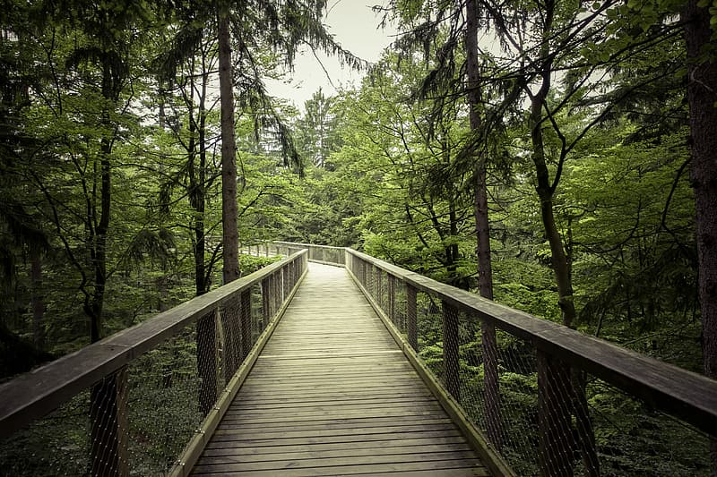 Brown wooden bridge between forest under cloudy sky