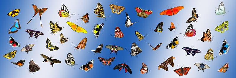 Assorted butterflies in blue background