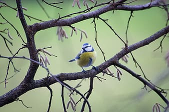 Shallow focus photography of bird on tree branch during daytime