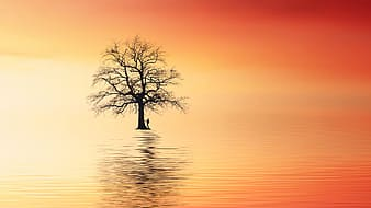 Silhouette of tree on water during sunset