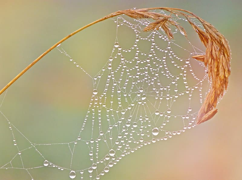 Spider web on brown grass with water dews