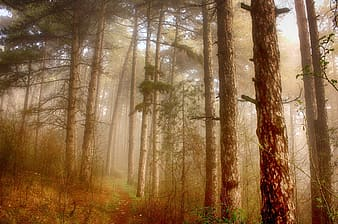 Forest with fog at daytime