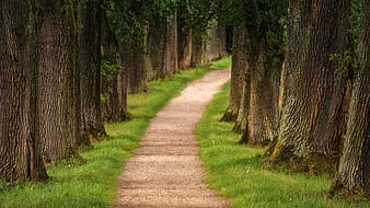 Brown pathway between green grass and trees during daytime