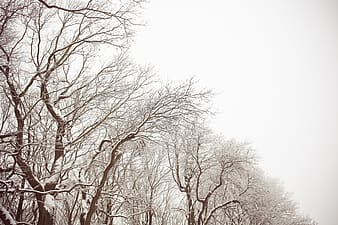 Photo of brown trees covered with snow