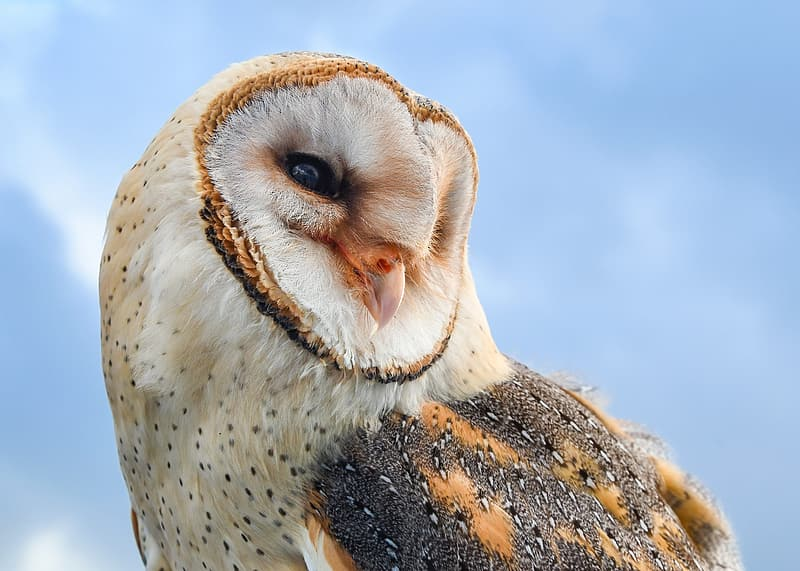 White and brown owl under blue skies