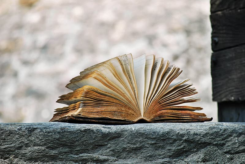 Selective focus photography of book on gray concrete surface