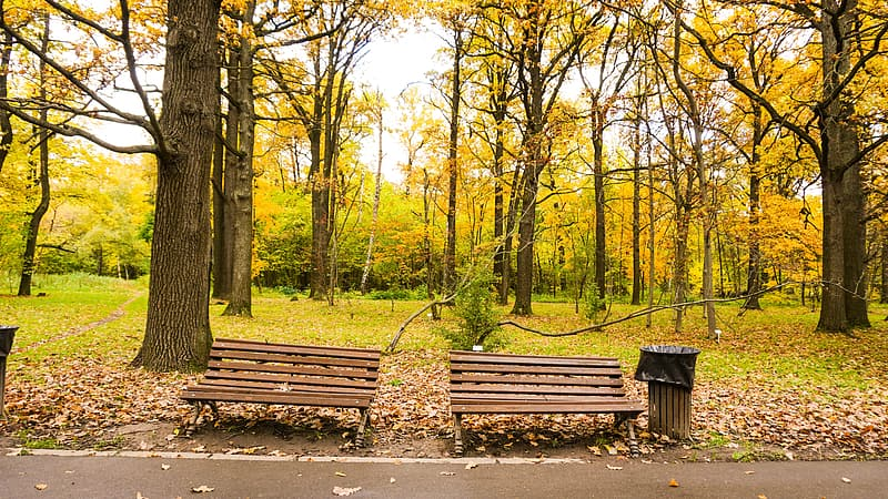 Two brown wooden bench beside trash can with tall yellow trees background