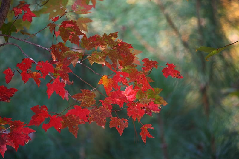 Red tree leaves during daytime