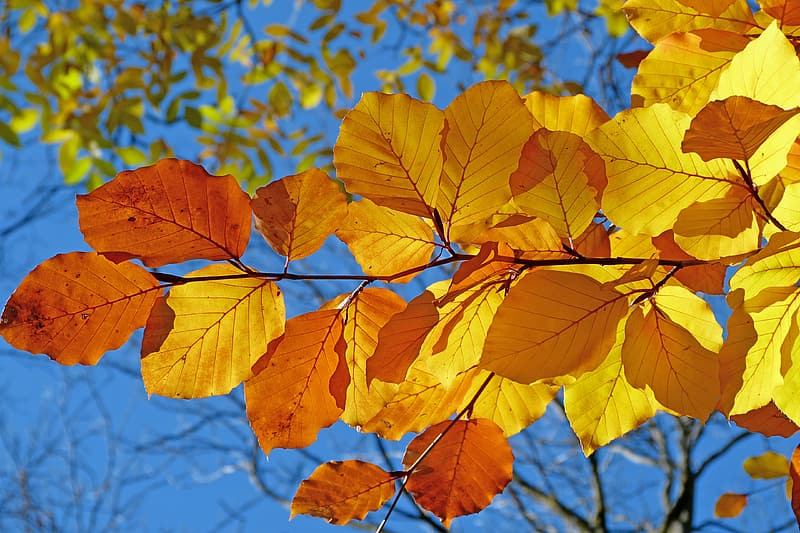 Brown and yellow leaf during daytime