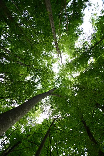 Green leafed trees during daytime