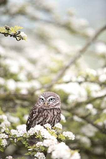 Owl on green leafed plant with white flowers
