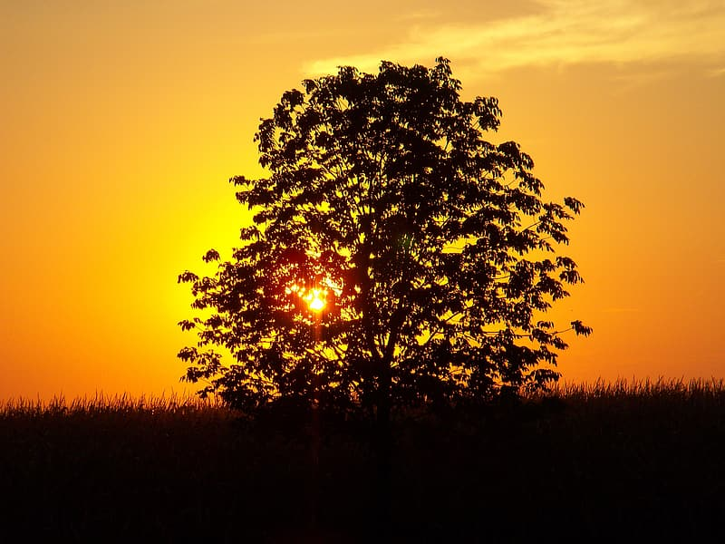 Silhouette photo of a tree during golden hour