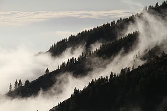 Pine trees on mountain with cliouds