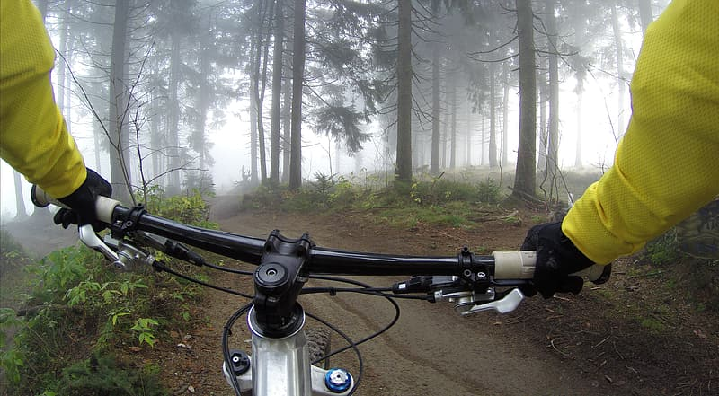 Person riding bicycle surrounded by forest trees