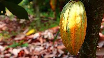 Yellow and green pumpkin on brown dried leaves
