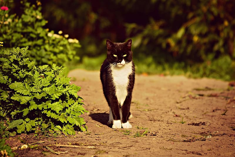 Tuxedo cat sitting on ground near green plant during daytime