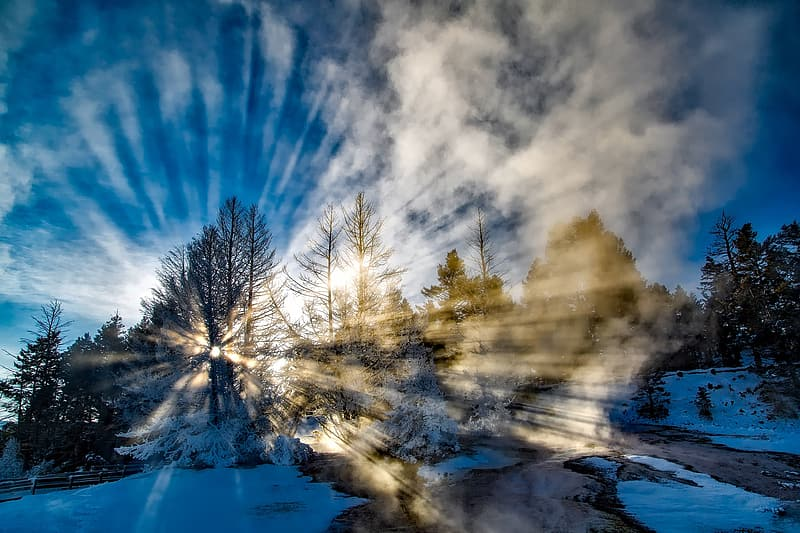 Landscape photo of trees with snow during golden hour