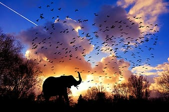 Silhouette of elephant under blue sky during daytime
