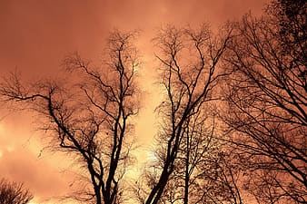 trees, tree tops, branches, bare branches, winter trees, deciduous, silhouette, outline, glow, golden glow