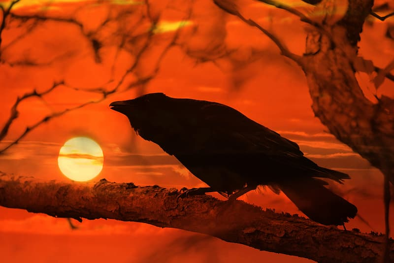 Black crow on brown tree branch during night time
