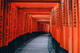 Orange and black posts with pathway