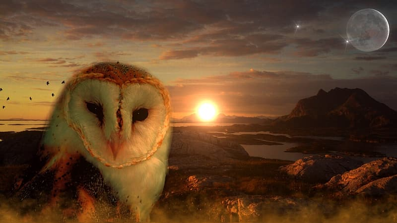 Edited photo of white and brown owl