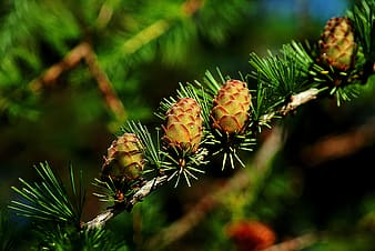 Macro photography of brown pine cone