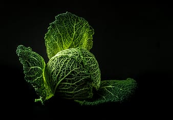 Green cabbage with black background