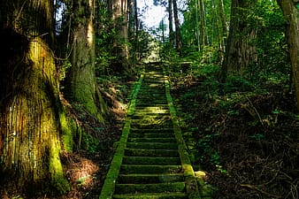 Grey concrete stairs between green leaf trees at daytime