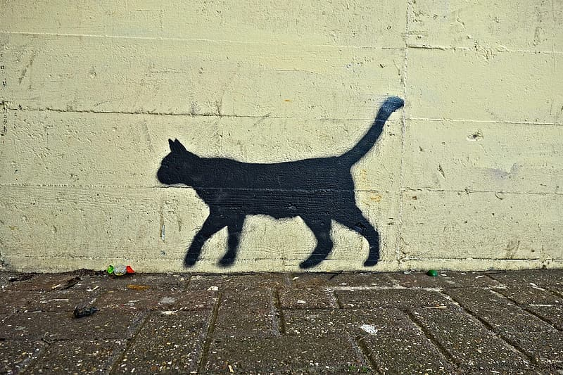 Photo of black cat wall paint